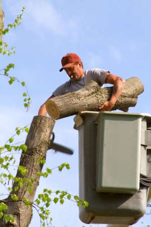 Man working cutting down a tree - standing in a lift bucket truck.   photo