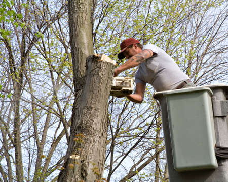 A tree worker working from bucket truck. photo