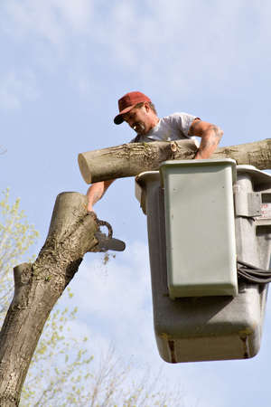 Tree worker cutting down tree.  Log in one hand - chainsaw in the other.  photo