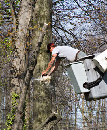 Tree trimmer using a chainsaw around electrical lines.