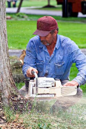 sawdust: Man cutting down a tree - sawdust flying everywhere.  Stock Photo