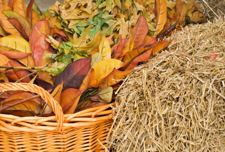 Autumn leaves and straw with a woven basket in warm colors for background.