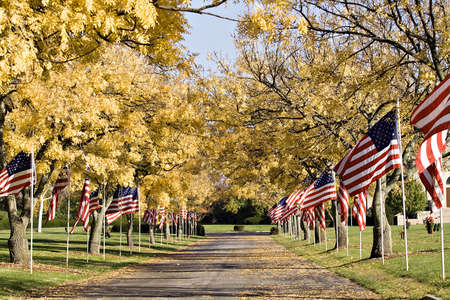 American flags line the driveway of a cemetery on Veterans Day. Stock Photo