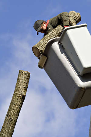 tree works: A man works from a bucket lift - removing a tree piece by piece.   Stock Photo