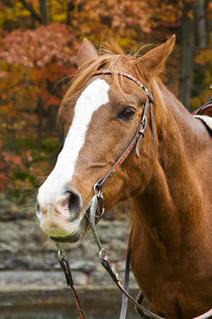luster: A horse enjoys a day in the park in autumn. Stock Photo