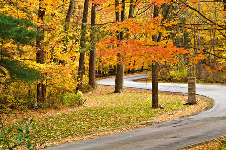 A winding road curves through a autumn scenic park.