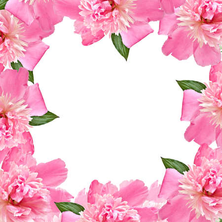 A square border of pink peony on white background isolated. photo