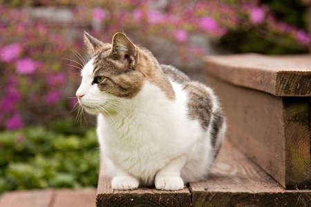 House cat sitting on garden steps in springtime. Stock Photo