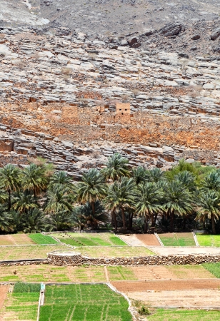 Oman mountain village and agriculture
