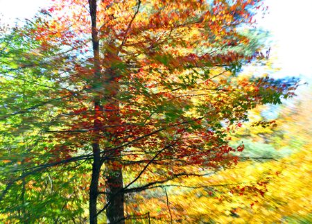 Fall Colors with motion blur giving painterly effect