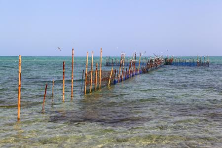 gcc: Traditional Intertidal Fishing, the Hadra