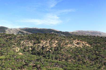 lebanon: Pine Forest, Lebanon