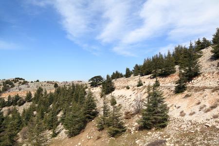 libani: Lebanon landscape with cedars Stock Photo