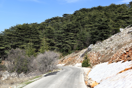 cedars: Lebanon Nature, Cedars and Snow