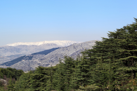 cedars: Lebanon Landscape: Cedars and Snow