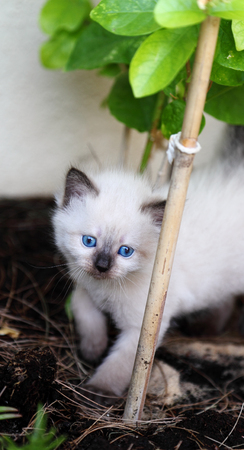grey eyed: kitten in garden