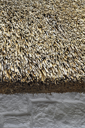 thatch: thatch roof