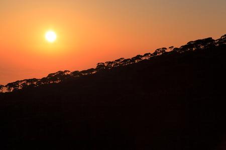 Sunset over Pine Forest, Lebanon Stock Photo