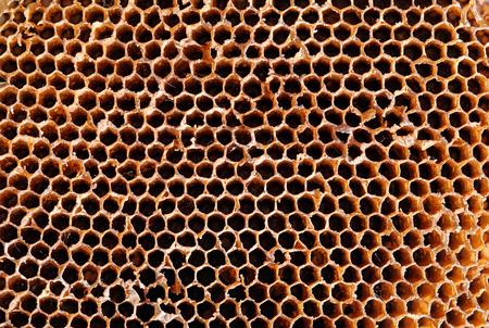 Fond en nid d'abeille Banque d'images - 98598062