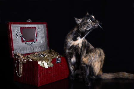 unnecessary: Unusual yard cat sitting with a treasure chest on a black background