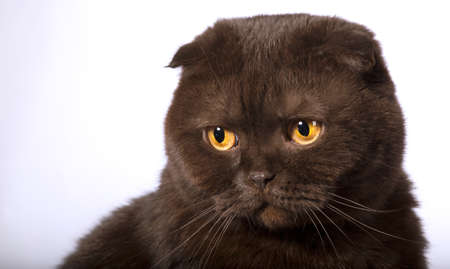 miffed: Sad offended cat