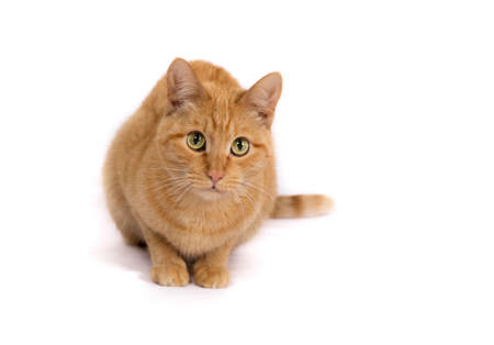 Woozy carroty cat with beautiful surprised eyes on a white background Stock Photo