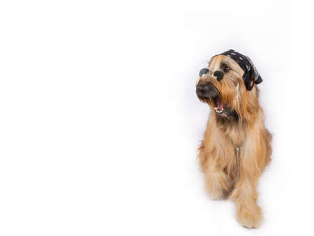 surprised dog: Surprised dog DJ is sitting on a white background