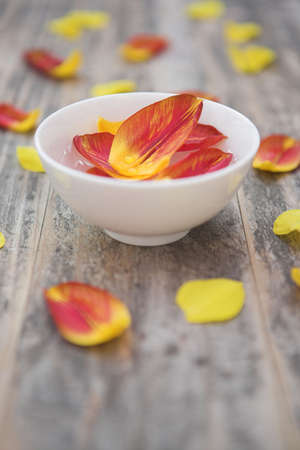 Tulip petals in essential essence with petals around (aromatherapyalternative therapy concept)  - shallow dof