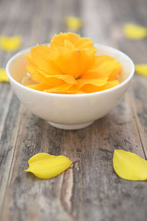 Daffodil (narcissis) in a bowl with essential essense (aromatherapyalternative therapy concept)- shallow dof
