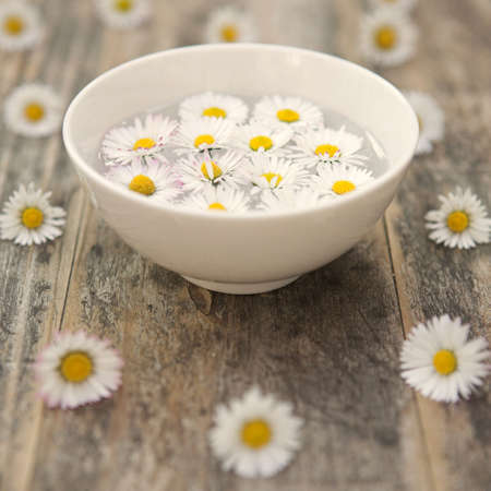 Daisies in essential essense - aromatherapy/aternative therapy concept - shallow dof