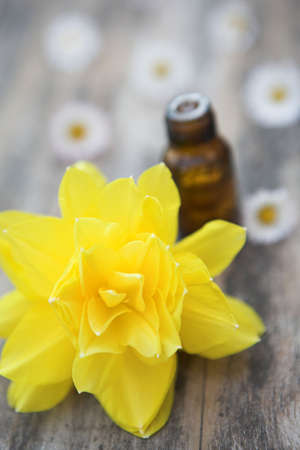 Close up of a daffodil (narcissis) & aromatherapy oil bottle - shallow dof
