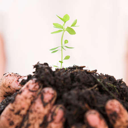 Cupped hands holding a new plant in soil - shallow dof