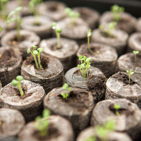 Seedlings beginning to grow in a propagator - shallow dof Stock Photo