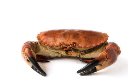 Brown crab - isolated on white, shallow dof