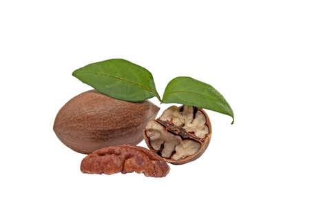 pekan: Pekan nut on white background Stock Photo