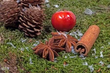 anise: Anise and pinecone on moss. Stock Photo