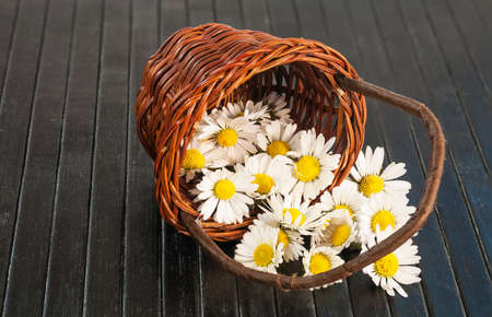 Beautiful spring flower laying in a small brown basket. photo
