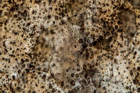 nite: Old wood vein forms a nite pattern