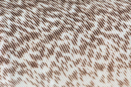 bird feathers: A bird feathers with brown and white fiber