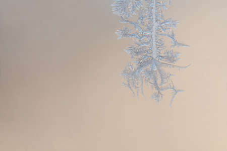 A beautiful ice crystal in a cold morning