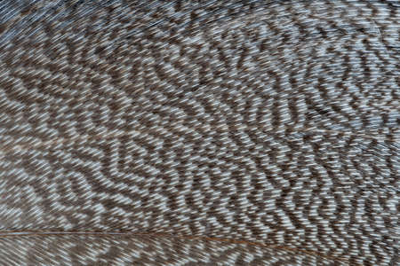 A beautiful feather with a brown and white pattern. Imagens - 101134700