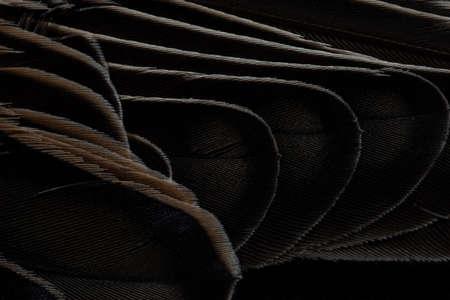 A beautiful dark bird wing with light briwn tips. Imagens - 101183411