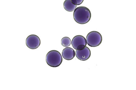 A group of violet globes isolated over a white background.