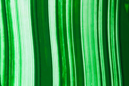 A green and white slightly curved linear pattern.