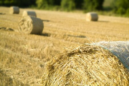 bale of straw close-up Stock Photo - 5114899