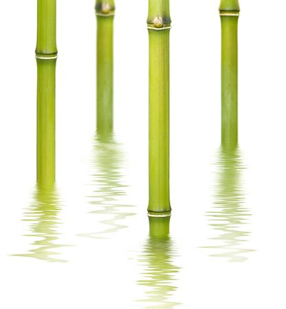 bamboo reflecting on the water surface photo