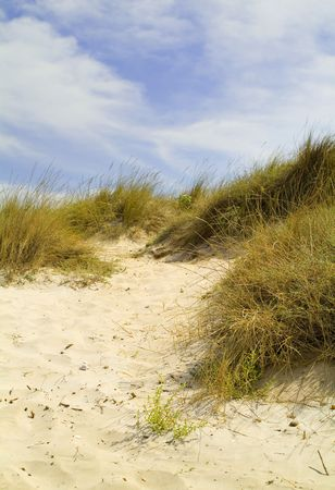 dunes at the sea