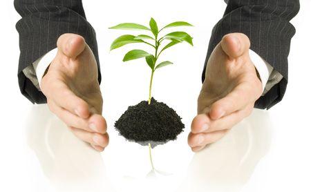 little business man: hombre de negocios que cubre un poco las plantas entre sus manos
