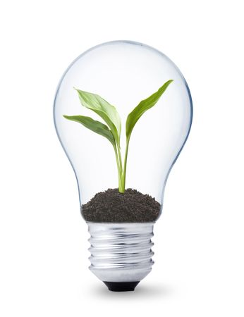 green energy concept, lightbulb with plant growing inside Stock Photo - 5114864