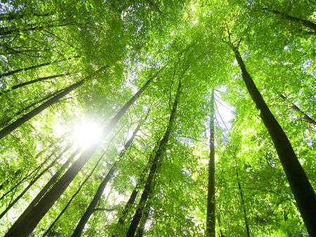 shining through: sole che splende attraverso l'albero-top (grandangolo tiro)